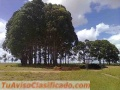 Fazenda com 3.500 hectares, tendo 1100 metros de altitude excelente no Brasil,